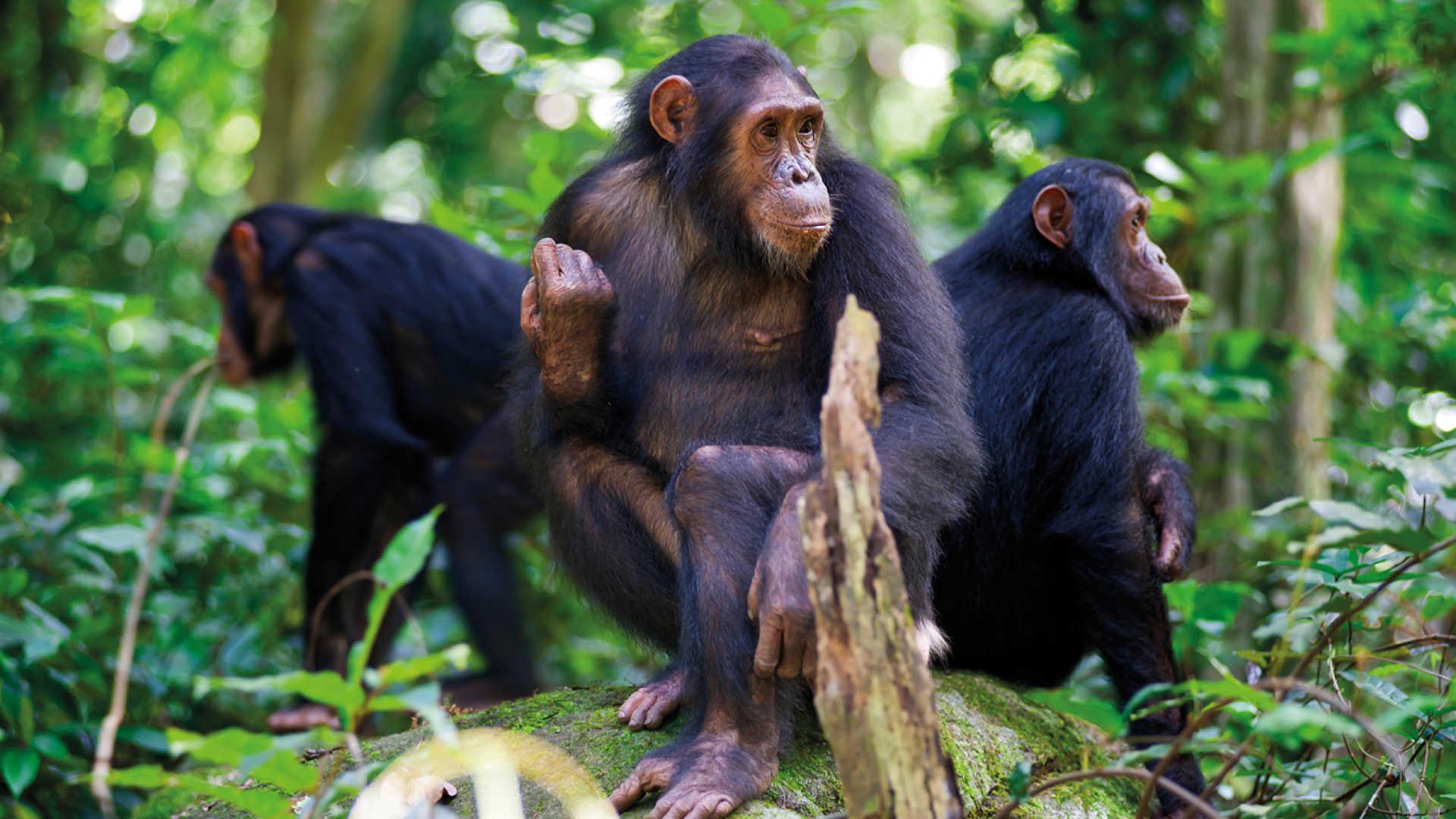Rwanda Tourism Packages