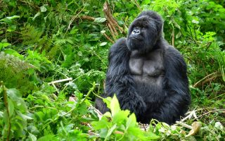 4 Days Virunga national park safari