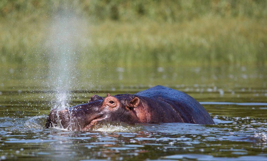 Wildlife Viewing Safaris in Rwanda