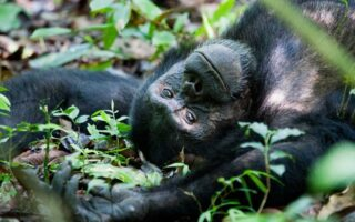 3 Days Semuliki Chimpanzee Trekking