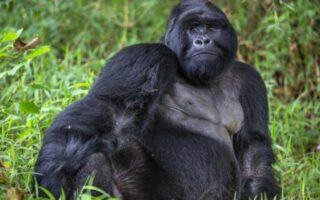 Mgahinga Gorilla National Park