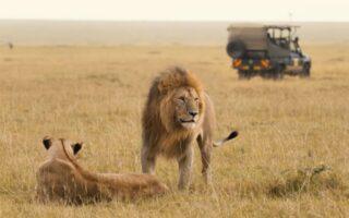 3 Days Fly-In Masai Mara Safari