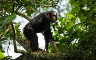 6 Days Virunga Primates & Nyiragongo Hike