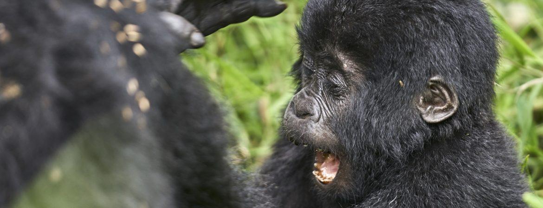 12 Days Rwanda Primates & Wildlife Safaris