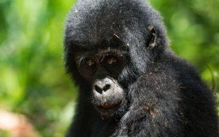 2 Days Rwanda Gorilla trekking safari