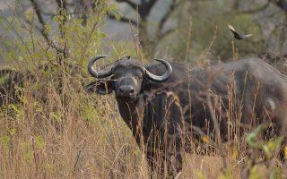 3 Days Akagera Wildlife tour