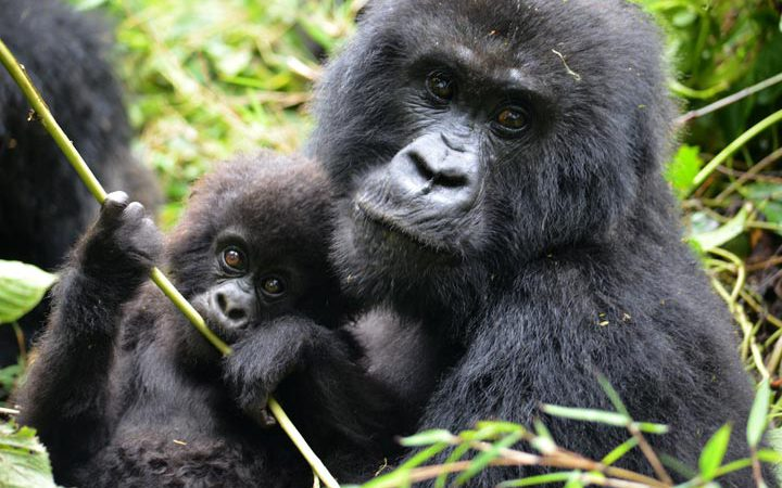 4 Days Rwanda Primates Tour