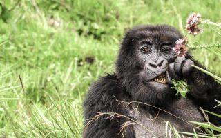 5 Days Rwanda Primates & Lake Kivu safari