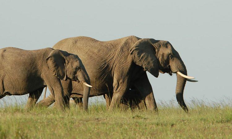 7 Days Best of Rwanda Safari