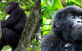 8 Days Rwanda Primates Safari