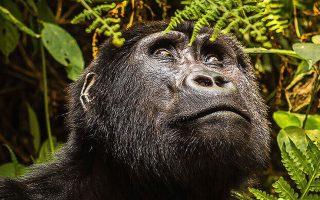 6 Days Rwanda Primates Holiday