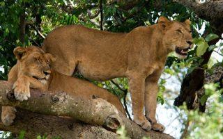 Activities in Queen Elizabeth National Park